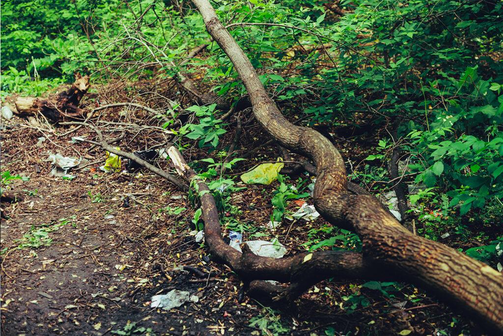 Residuos y basuraleza acumulados en un bosque.